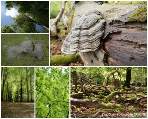 120513 Aardhuis Hoog Soeren_collage_2